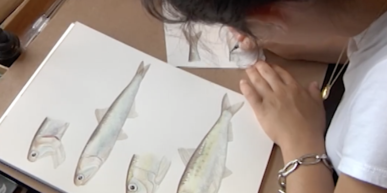 Art Being Used to Inspire Others to Learn More About Ocean Life